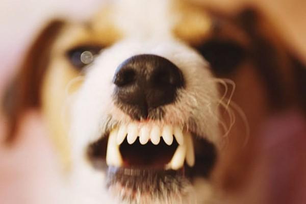 un cucciolo diventa aggressivo