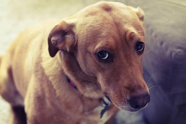 un cane guarda dal basso