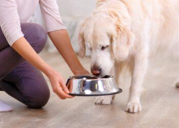 cane mangia crocchette dalla ciotola