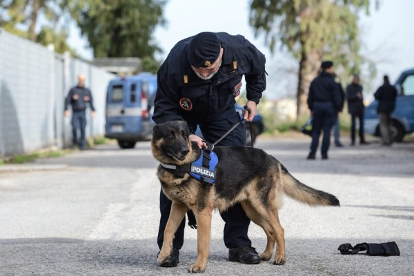 addestramento cane poliziotto