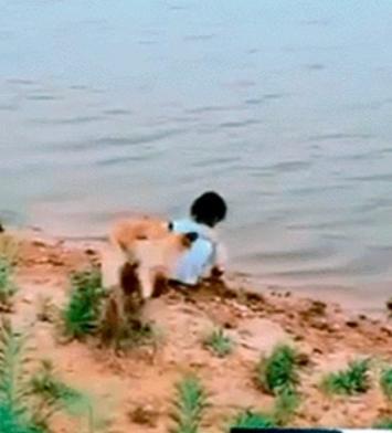 cane-salva-bambina