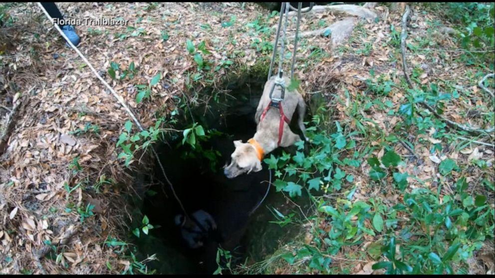 Cane salvato dopo esser precipitato dentro una caverna