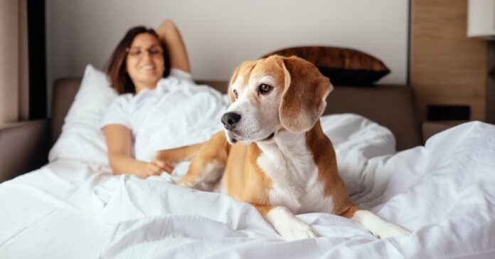 un cane sdraiato sulle lenzuola