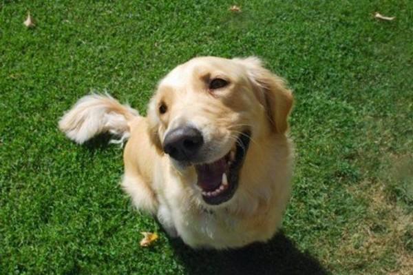 Pulizia di orecchie e occhi del cane: una piccola guida