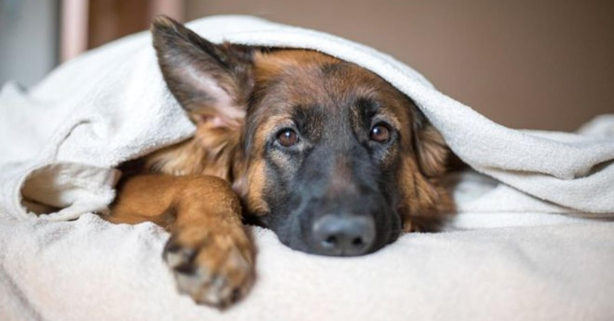 cosa fare se locchio del mio cane è infetto