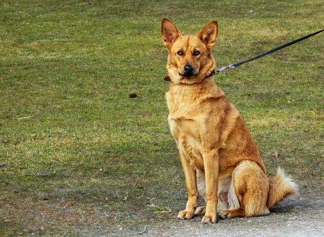cane-vietato