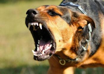 cane che abbaia