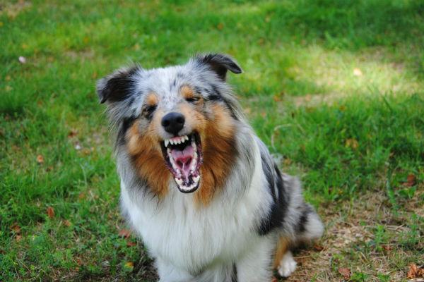 Esistono davvero i cani aggressivi?