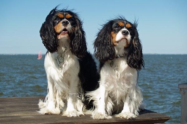 Cani che restano piccoli: tutte le razze