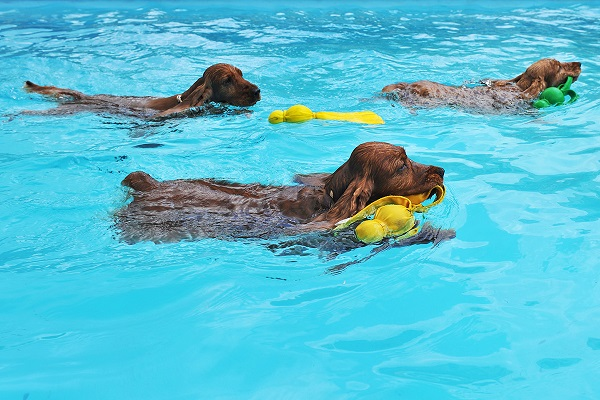 addestramento cani in acqua
