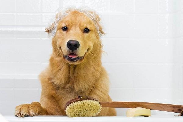 cane dentro la vasca