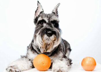 cane e arance