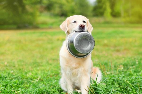 cane con ciotola