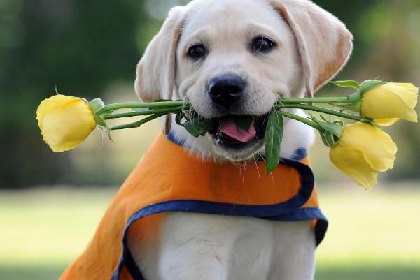 cucciolo con rose