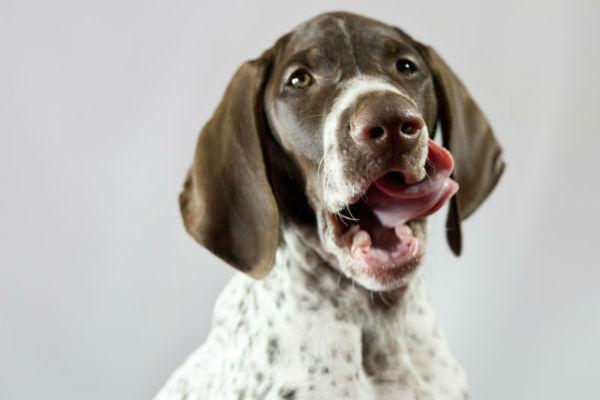 cane che si lecca i baffi