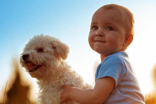 cane con bimbo