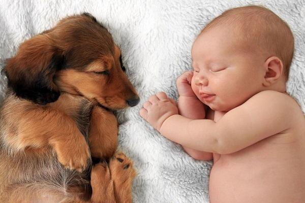 cane dorme con bimbo