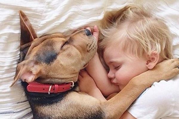 cane e bambino dormono