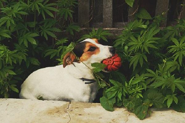 cane con palla in bocca
