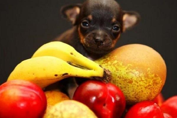 Cani e pompelmo: è vero che è velenoso?