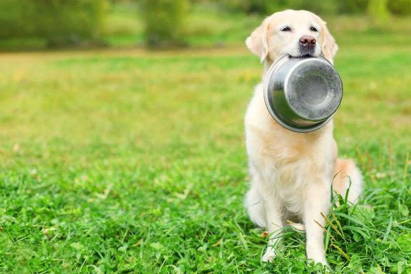 cane con ciotola in bocca
