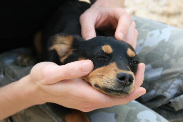 cane coccolato