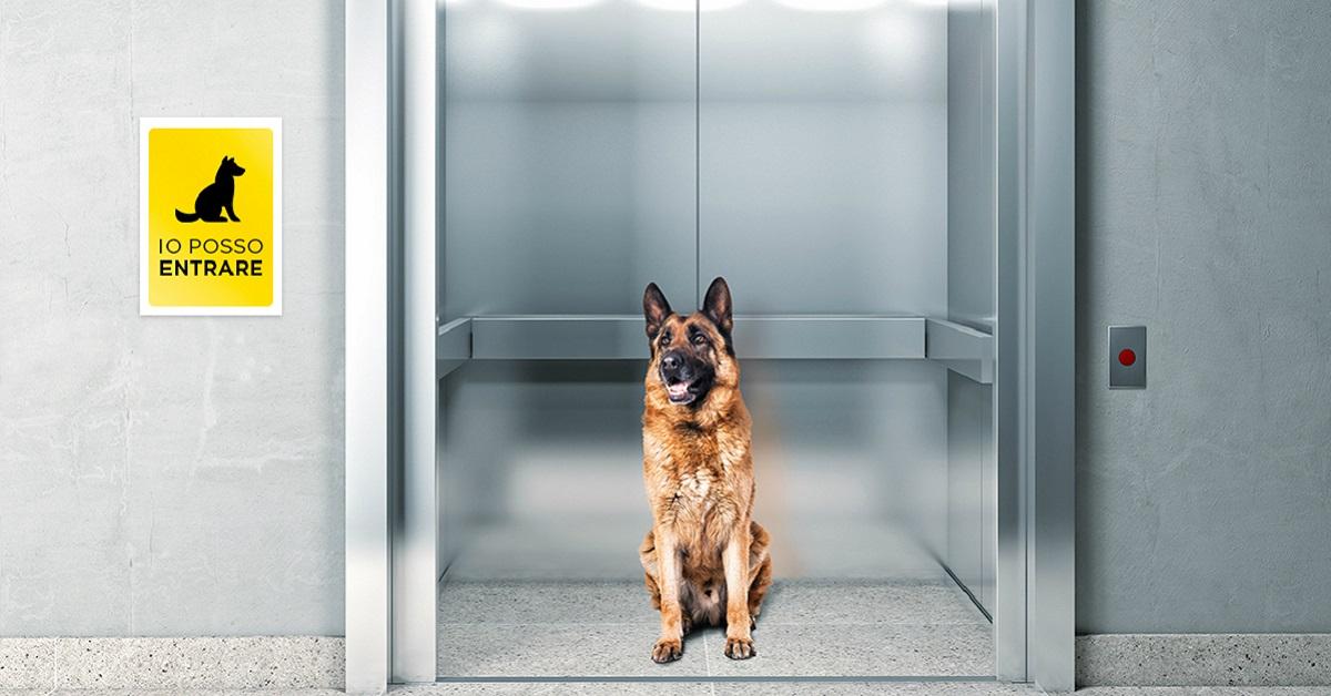 cane in condominio