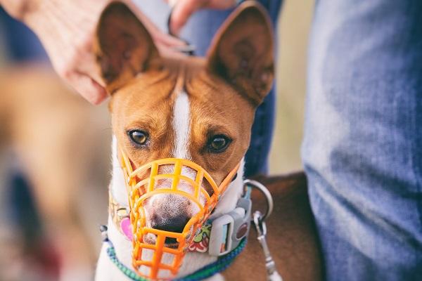 cane con museruola