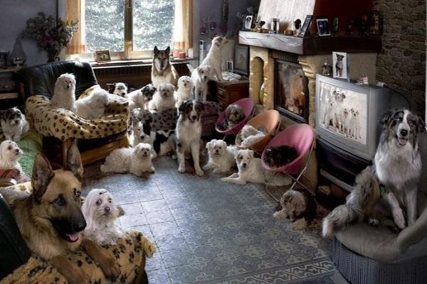 sovraffollamento di cani e gatti