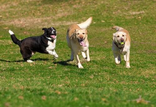 Zungri, ordinanza vieta la presenza di cani in piazze e ville