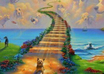 cani-ponte-dellarcobaleno