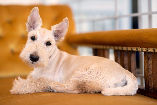 cagnolino sul divano