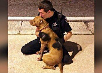 cani-salvati-agenti-polizia