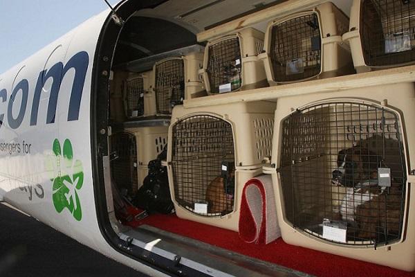cani dentro la stiva di un aereo