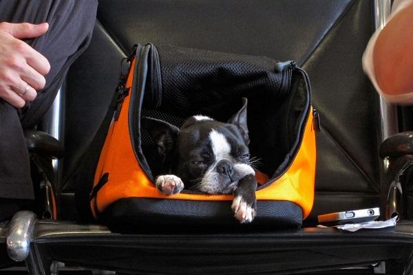 cane sedato in aereo