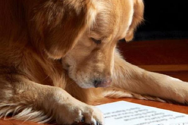 cane concentrato