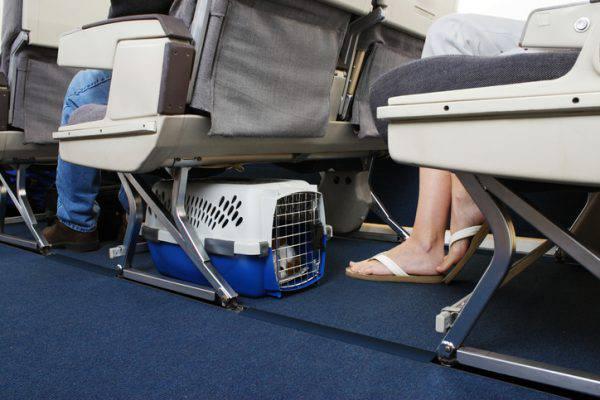 cane sotto il sedile in aereo
