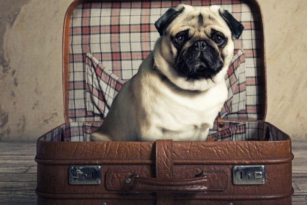cane carlino e valigia