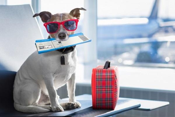 cane con biglietto aereo