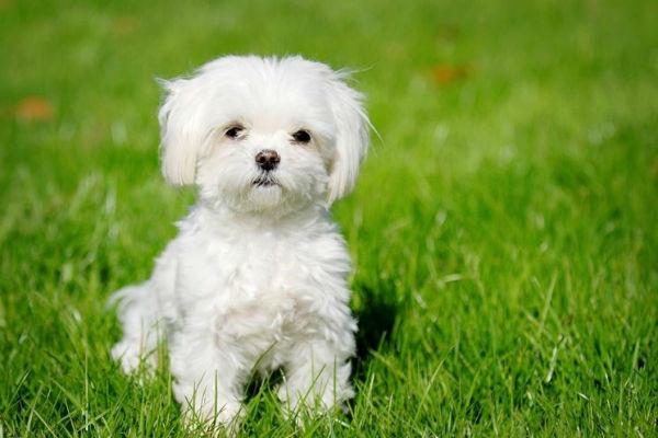 Cani sui 10 kg: quali sono?