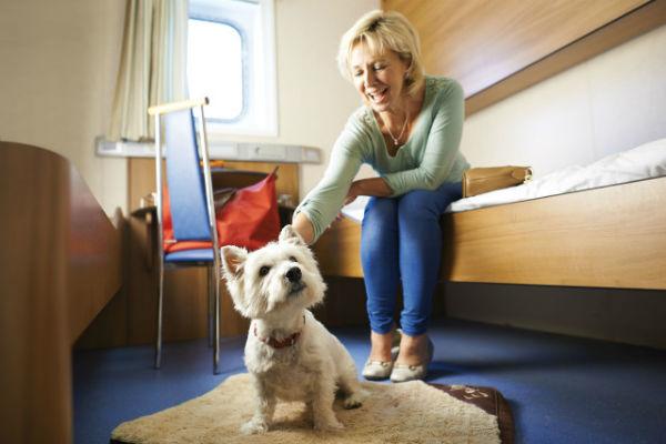 cane in stanza