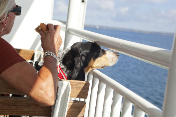 cane che osserva il mare