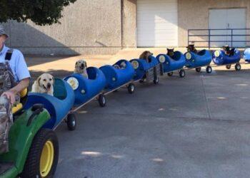 cani-trasportati-treno-speciale