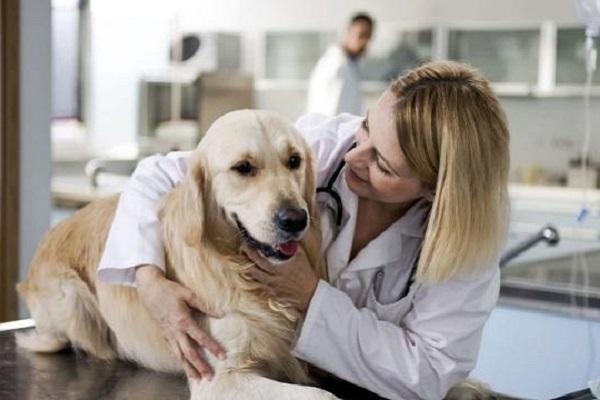 cane e veterinaria