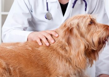 cane su tavolo chirurgico