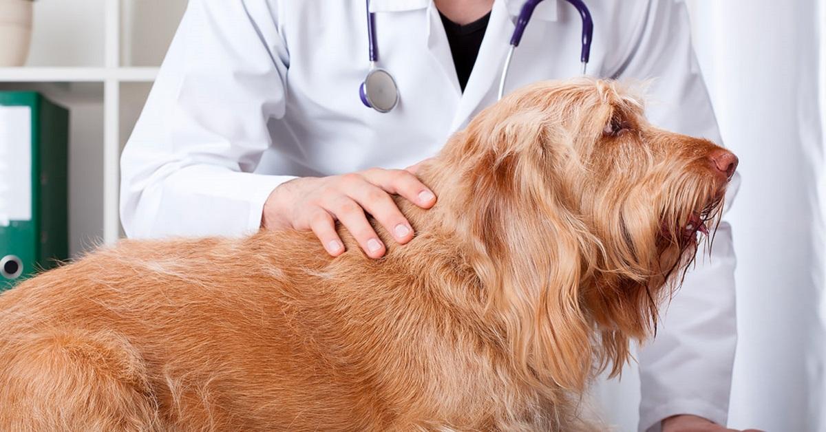 prostatite nel cane sintomi e cure treatment