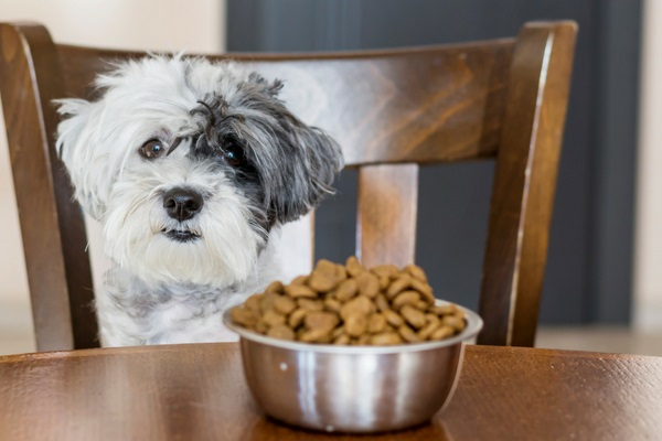 Cibo per cani con pochi ingredienti: i vantaggi