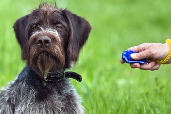 Clicker cane: cos'è e a cosa serve
