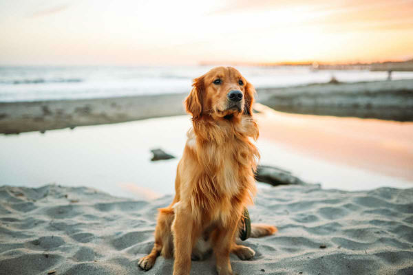 Comandi base per cani: quali sono?