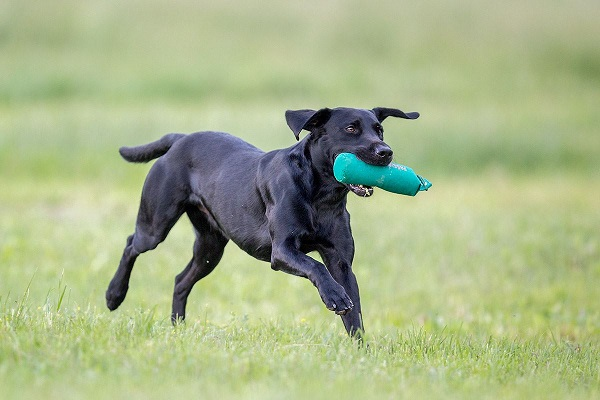 cane con bottiglia in bocca